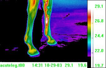 thermal image suspensory ligament